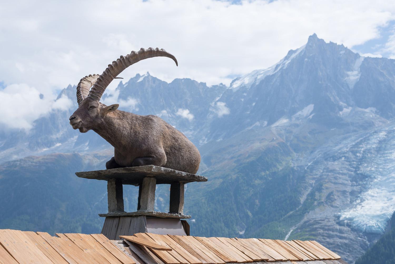 Bouquetin sur le toit face au Mont-Blanc