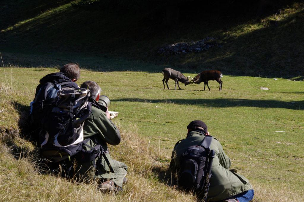 Photograph course at Merlet park