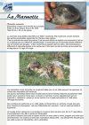 La marmotte - Parc de Merlet