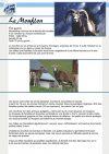 Le mouflon - Parc de Merlet