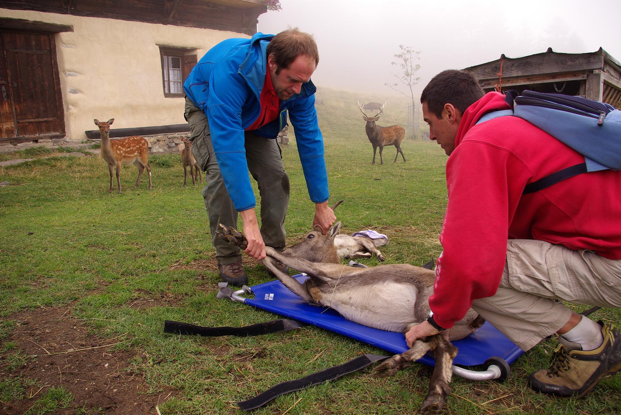 soins aux animaux au parc de Merlet