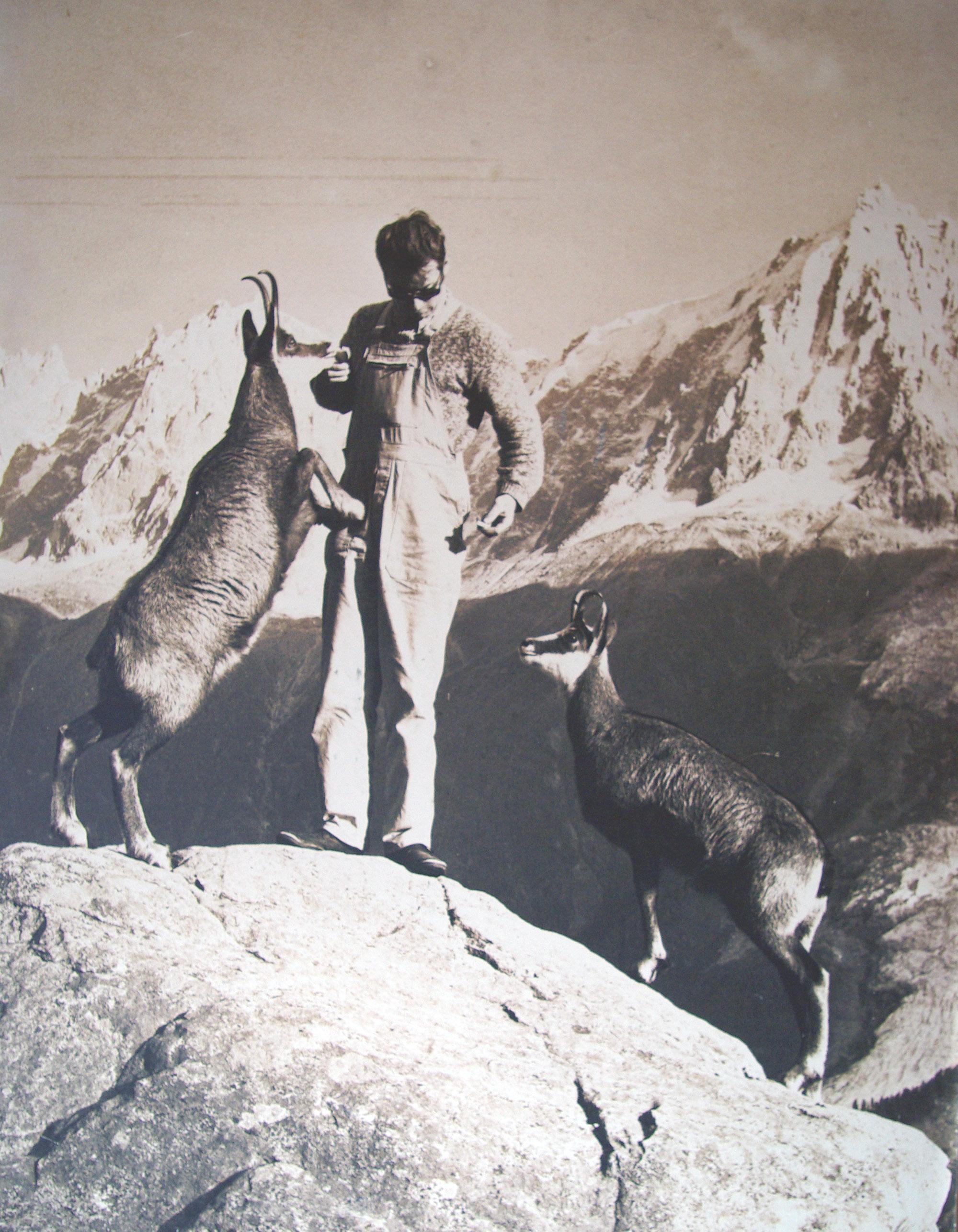 Philippe Cachat et ses chamois à Merlet