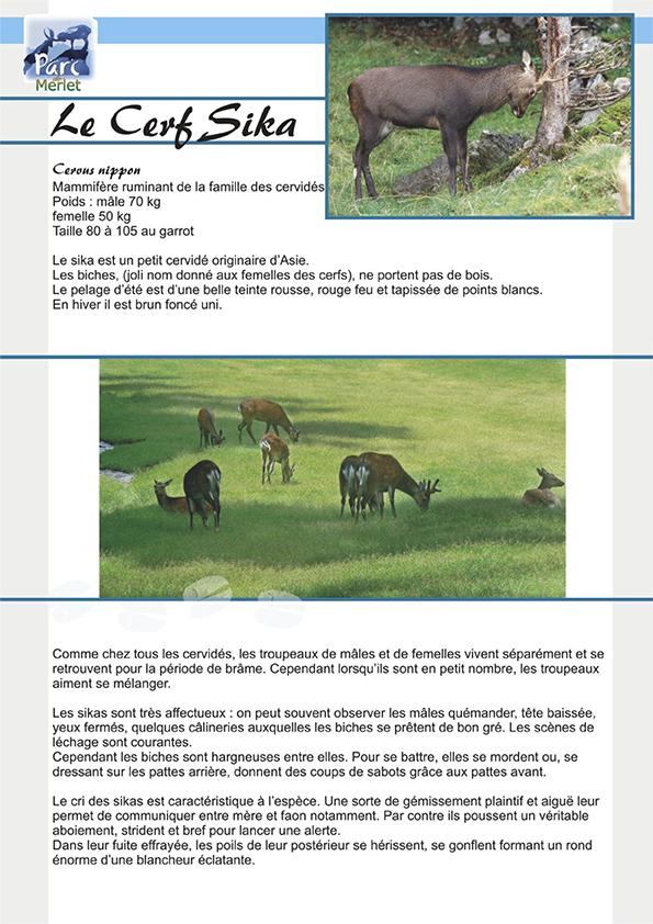 Le cerf sika - Parc de Merlet