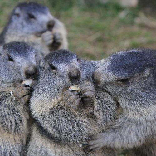 Le Goûter des marmottes au parc de merlet