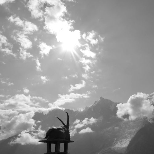Ibex in black and white